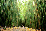 Bamboo Pathway poster