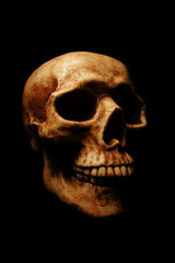 A dramatically lit Halloween skull on a black background.