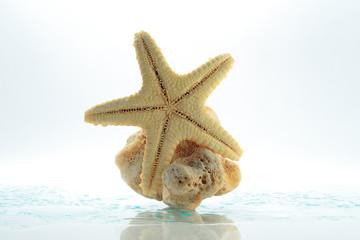Starfish & shell rock