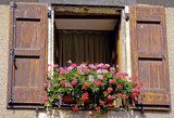 france shutters window flowers region florac cevennes poster