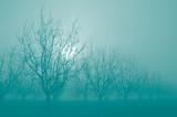 Turquoise Sunrise Through  Silhouette Bare Walnut Trees in Fog poster