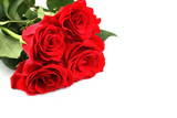 Red roses for Valentines Day or another special day - isolated. poster