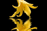 Yellow Summer Flower, Sparkling Dew , Stylized Reflection poster
