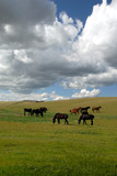 Horses in Vast Green Field under Dramatic Spring Sky poster