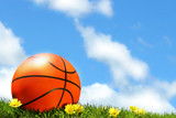 Basketball on the grass poster