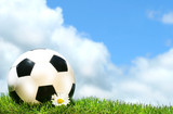 Soccerball with daisy against a blue sky poster