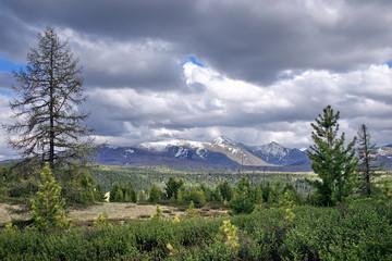mountain pass Ulagan, 2100m
