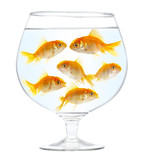 Aquarium with gold small fishes on a white background poster