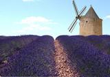 Lavande et moulin