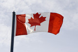 Canadian flag waving in the breeze in the sunshine poster