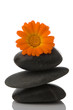 spa stone and orange flower on white background