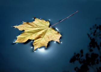 Fall leaf floating in water with sunlight reflecting around it