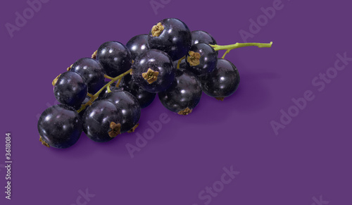 Black currant on purple