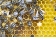 Honey bees on rate