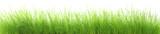 Herbes humides en très haute résolution poster