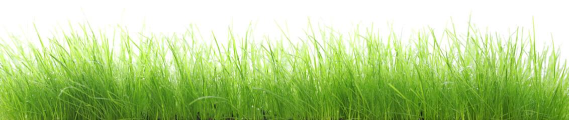 Herbes humides en très haute résolution