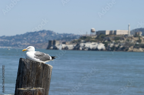 Bird and Alcatraz