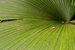 a closeup of  palm leaf in jungle