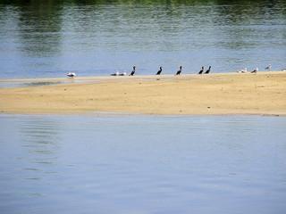 birds on island