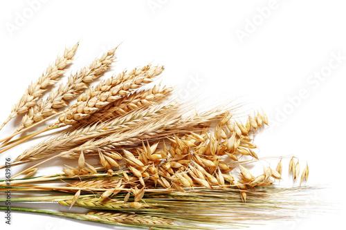 Leinwandbild Motiv Collection of different wheats isolated on white.