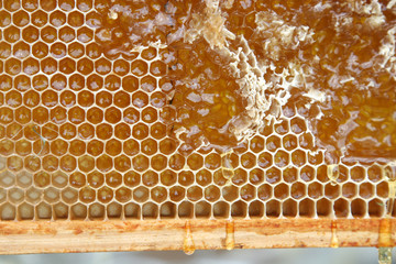 Close-up of natural honeycomb partially filled with honey