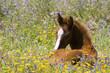 Leinwanddruck Bild cheval 16