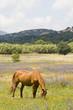 Leinwanddruck Bild cheval 18