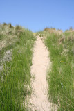 Sand path leading up through the dunes poster