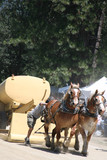 Two Draft Horses Pulling Sled poster