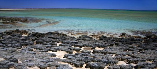 Stromatoliten im Hamelin Pool Australien_07_1294,01