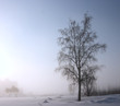 single tree is a misty winter day
