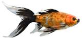 fish in an aquarium poster