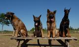 4 chiens de garde poster