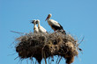 Storks_001