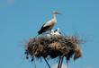 Storks_002