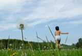 boy running in dandelion field, focus on dandelion poster
