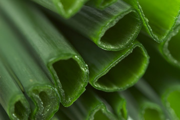 close up of fresh onion leaves