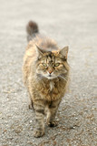 scruffy street cat with a hint of attitude poster