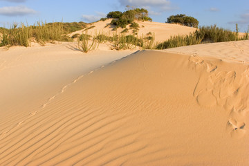 The sandy dunes covered by bushes and traces of animals