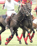 Polo Ponies Charging poster