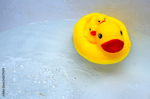 An image of duck with duckling