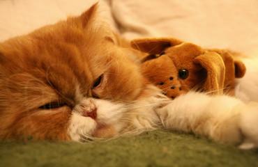 Cão e gato a dormir