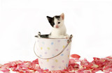 Kitty in a Bucket poster