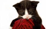 Cute little kitty poster