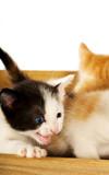 Crazed Kitty poster