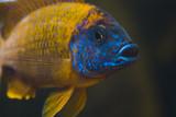 aquarium life poster
