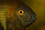 aquarium eye poster