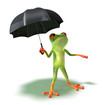 Grenouille a peur de la pluie