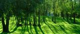 Crépuscule arborescent