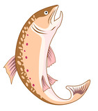 Rainbow trout on white background